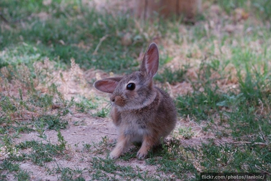 Ōkunoshima The Japanese Island That's Full Of Rabbits