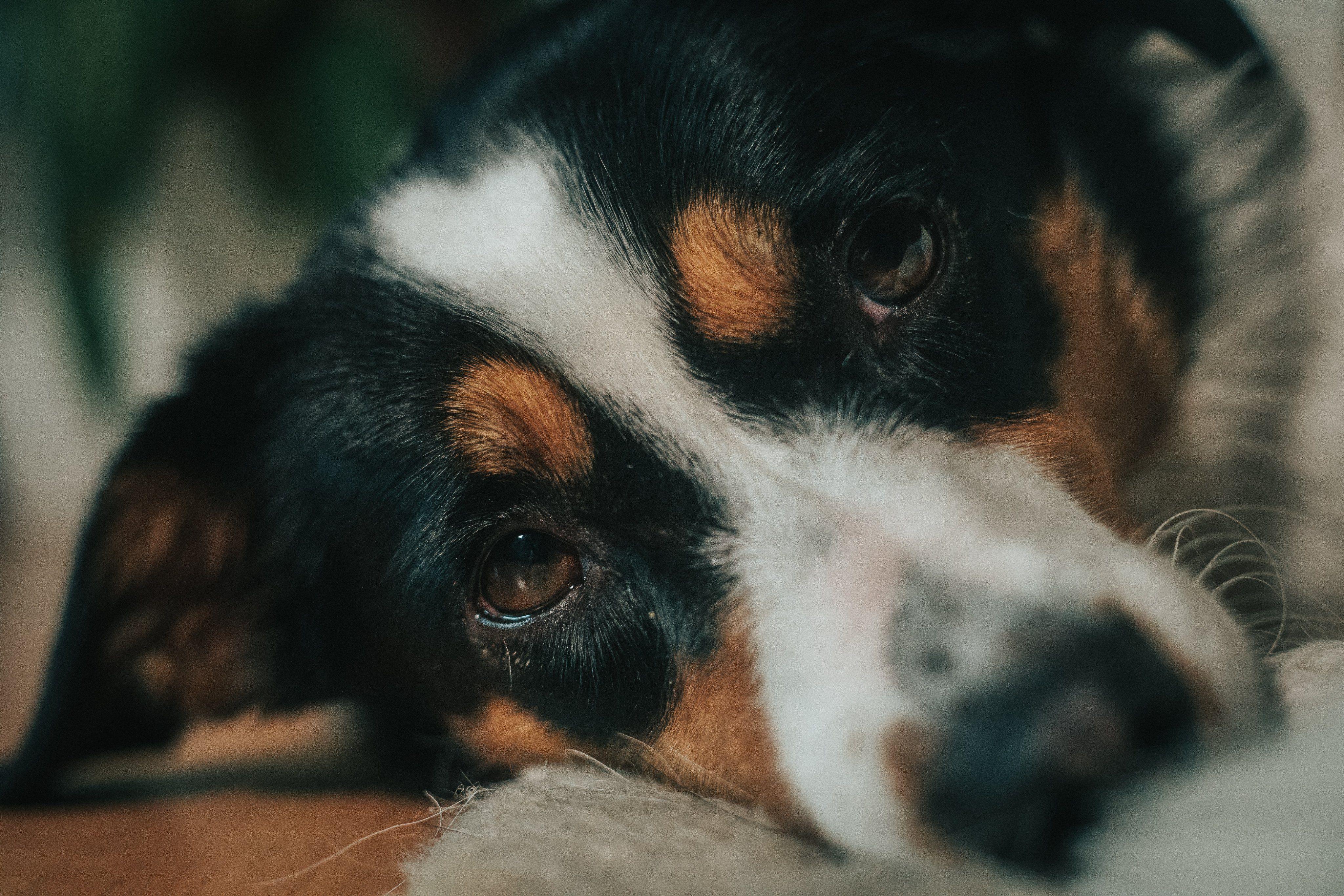 ペットくすりweb On Twitter Dogs Animals