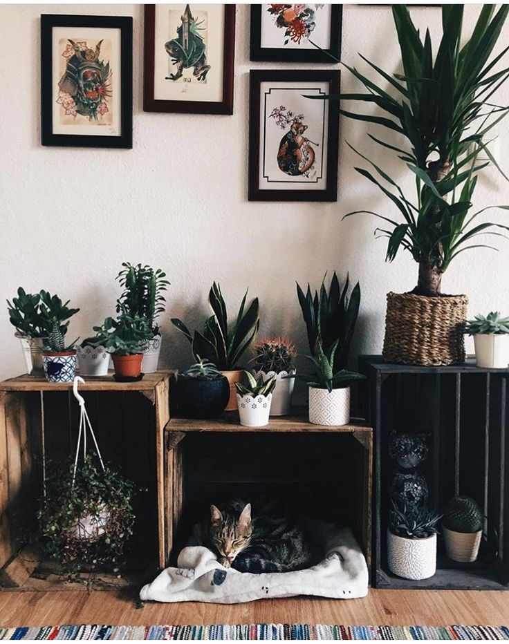 Photo of Potted plants | Storage cubes wood matching framed art K …