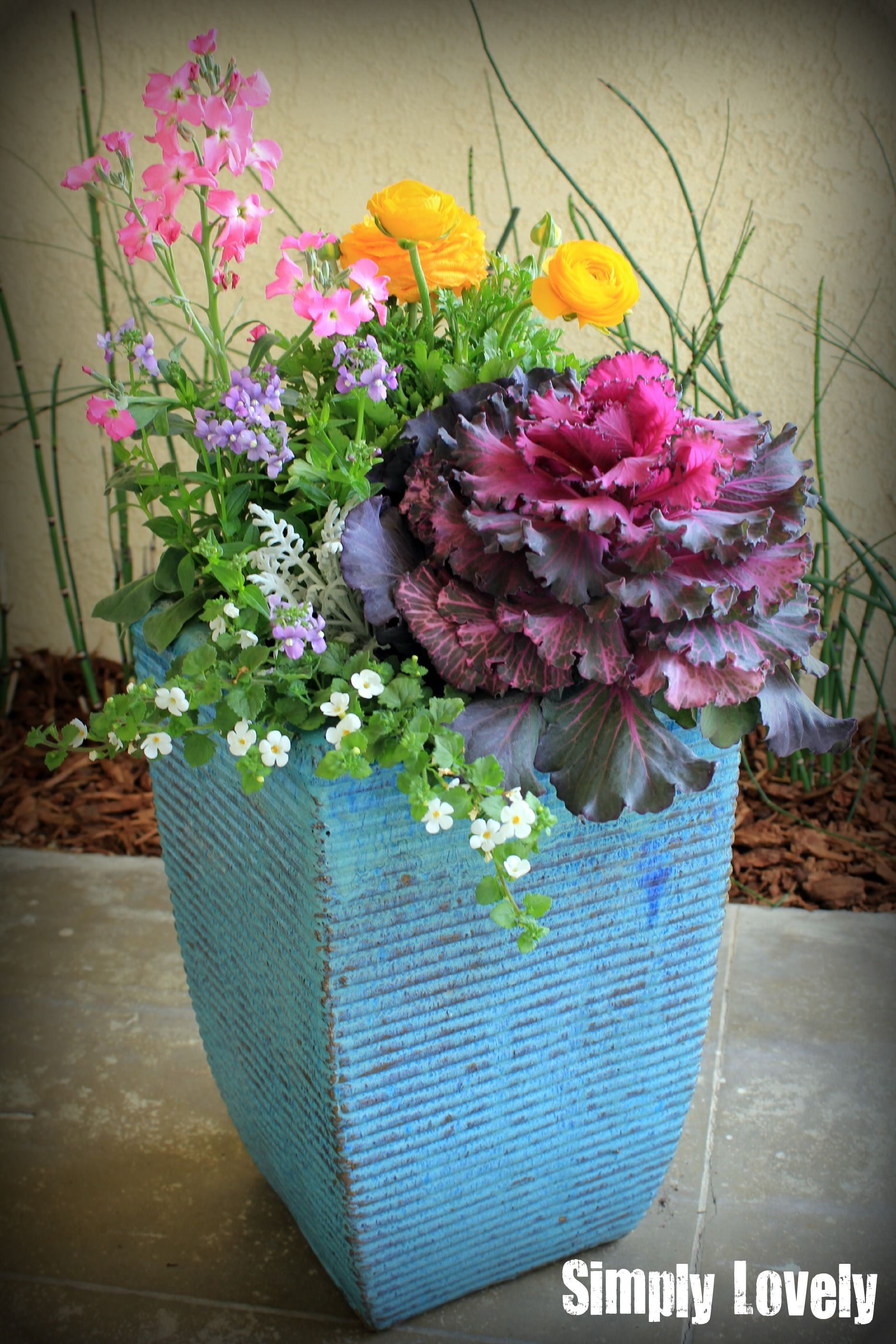 Colorful Potted Plants 400 x 300