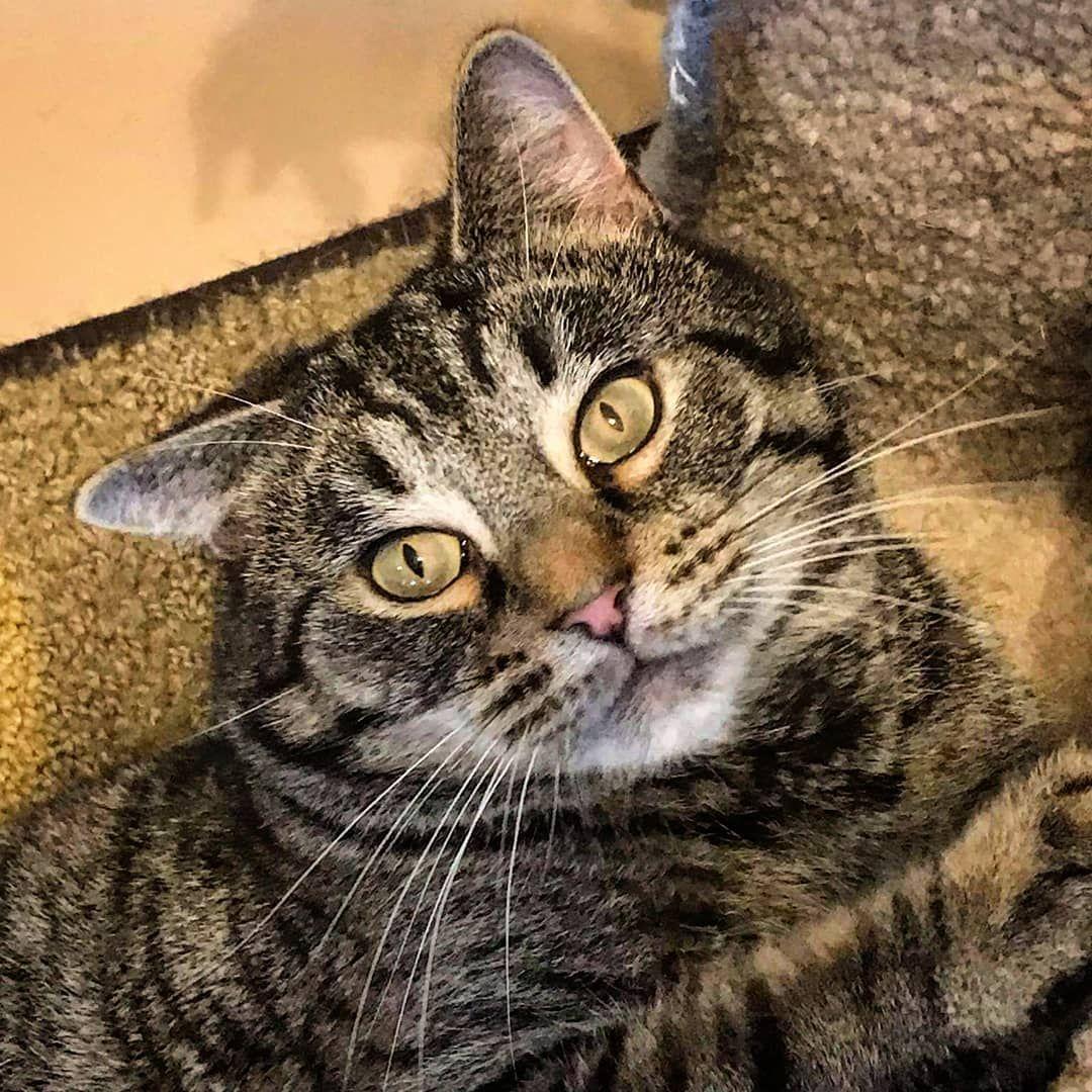 Adopt Ellis On Help Homeless Pets Pet Day Homeless Pets