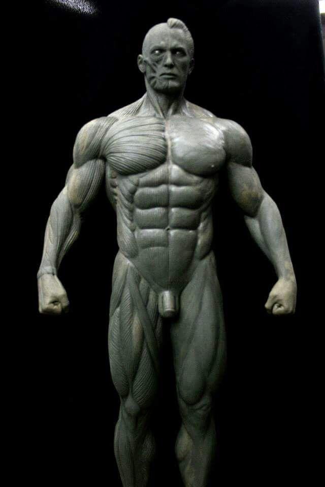 Jorge Soliz - male anatomy | Art References | Pinterest | Anatomy ...