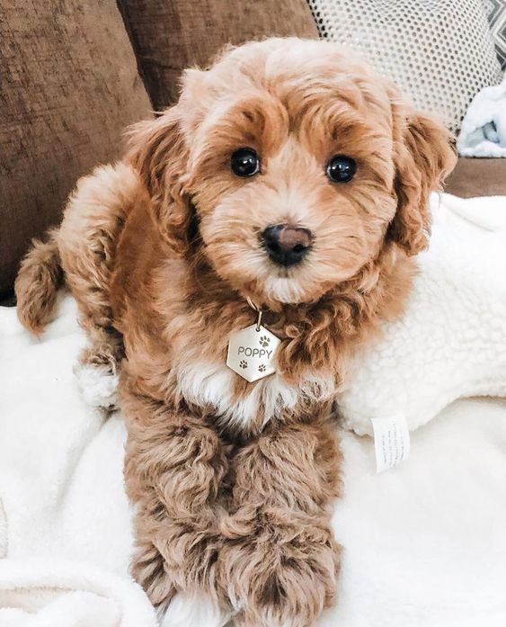Finding The Perfect Dog Name For Your New Best Friend Dogtime In 2020 Cute Baby Animals Baby Dogs Cute Dogs