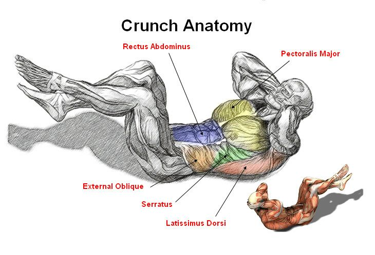 Abs crunch anatomy abdominal exercises for men