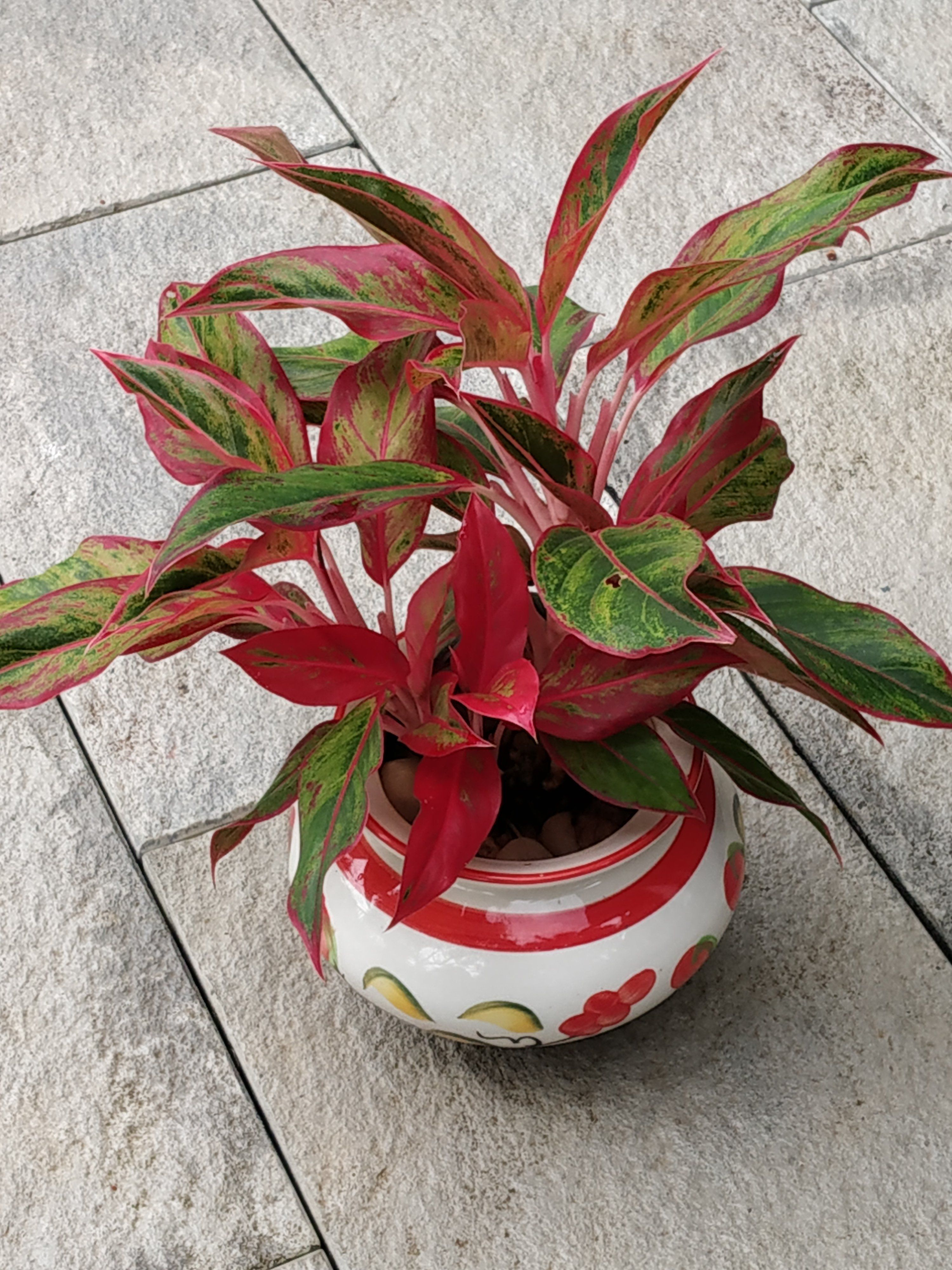 Most beautiful indoor plants, you can grow easily