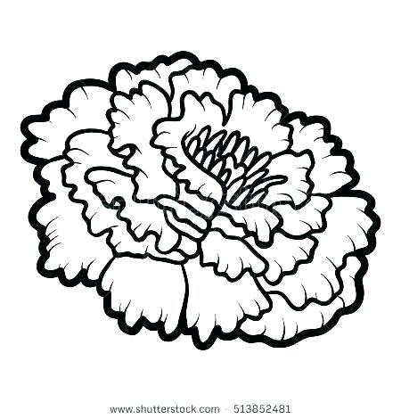 Marigold Flower Coloring Pages Designs Collections