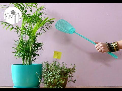 Jak Pozbyc Sie Zwalczyc Ziemiorke Sposoby Na Male Czarne Muszki Latajace Kolo Roslin Domowych Youtube Indoor Plants Planter Pots Plants