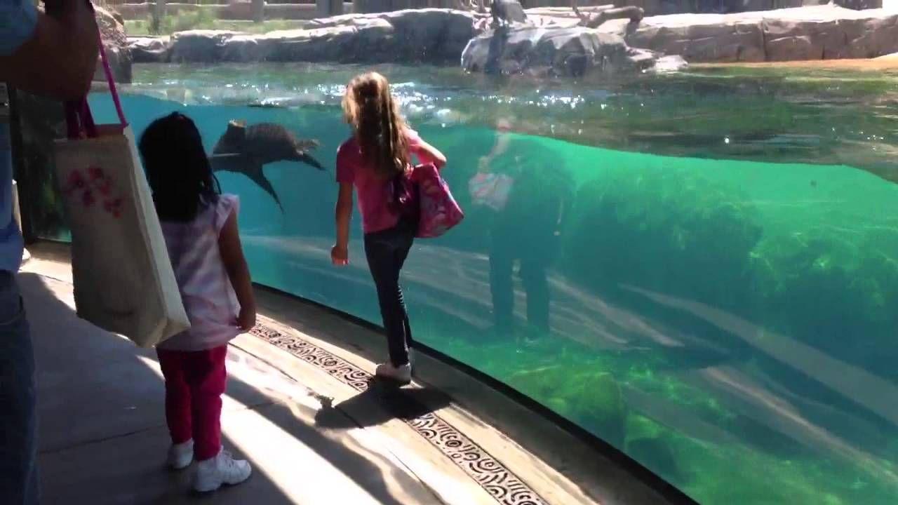 Seelöwen sorgt sich um kleines Mädchen - http://www.dravenstales.ch/seeloewen-sorgt-sich-um-kleines-maedchen/
