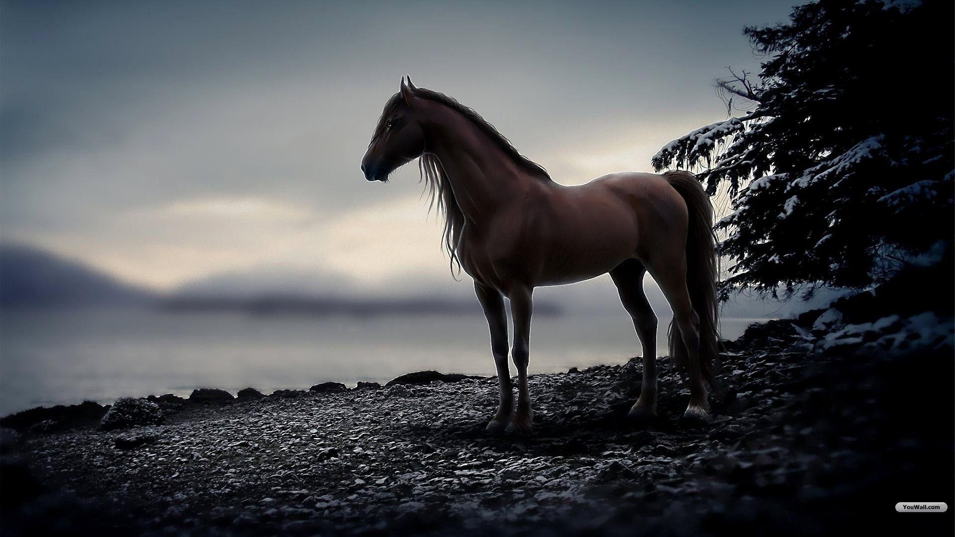 Beautiful Wallpaper Horse Desktop Background - 41e8365b905c4875597cd35d5f0539a3  You Should Have_485685.jpg