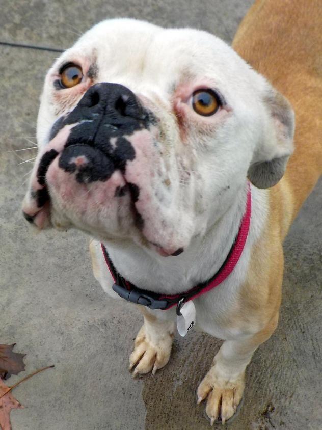 Adopt Mason On Poor Dog Dogs Animals Beautiful