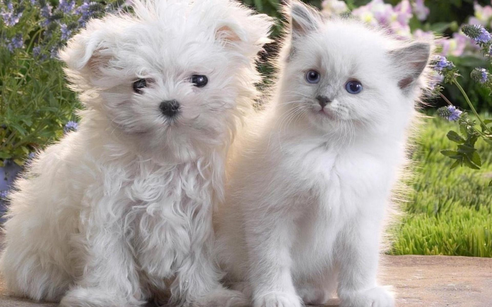 Beauty In White Cute Fluffy Cat Kitty Cats Kitten Kitties Dog Pupp Cute Puppies And Kittens Cute Cats And Dogs Cute Baby Animals