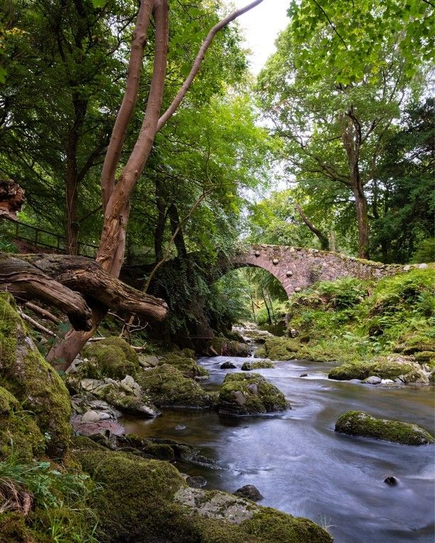 Tollymore Forest Park, Down, Northern Ireland — by Christopher Mitchell