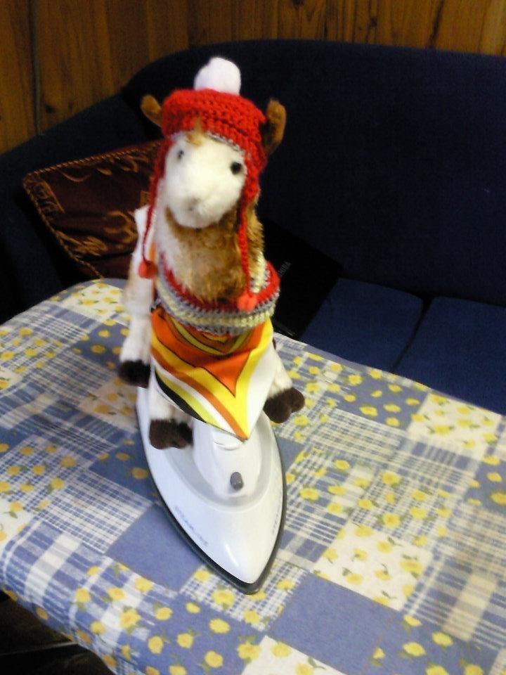 Extreme ironing llama style