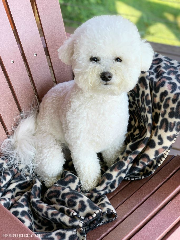 Blue Ridge Mountain Views and Getaway Cute dogs, Cute