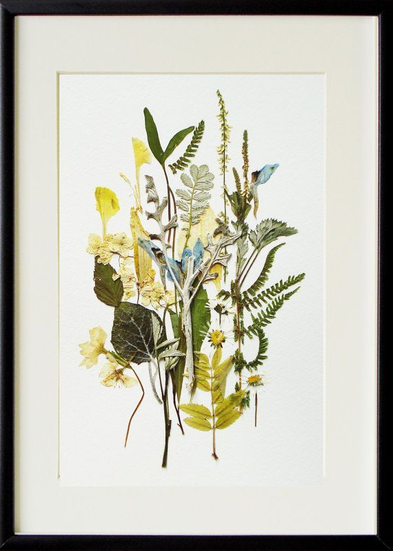 Blumenkunst 02 Eingerahmtes Kunstwerk Originalkunst Botanische Kunst Herbarium a…