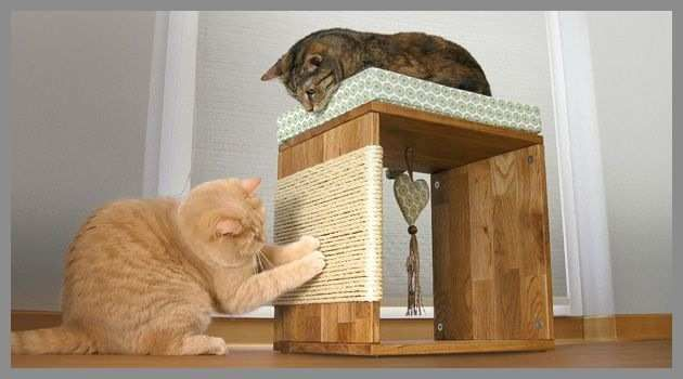 Katzen, Katzenmöbel Und Katzen