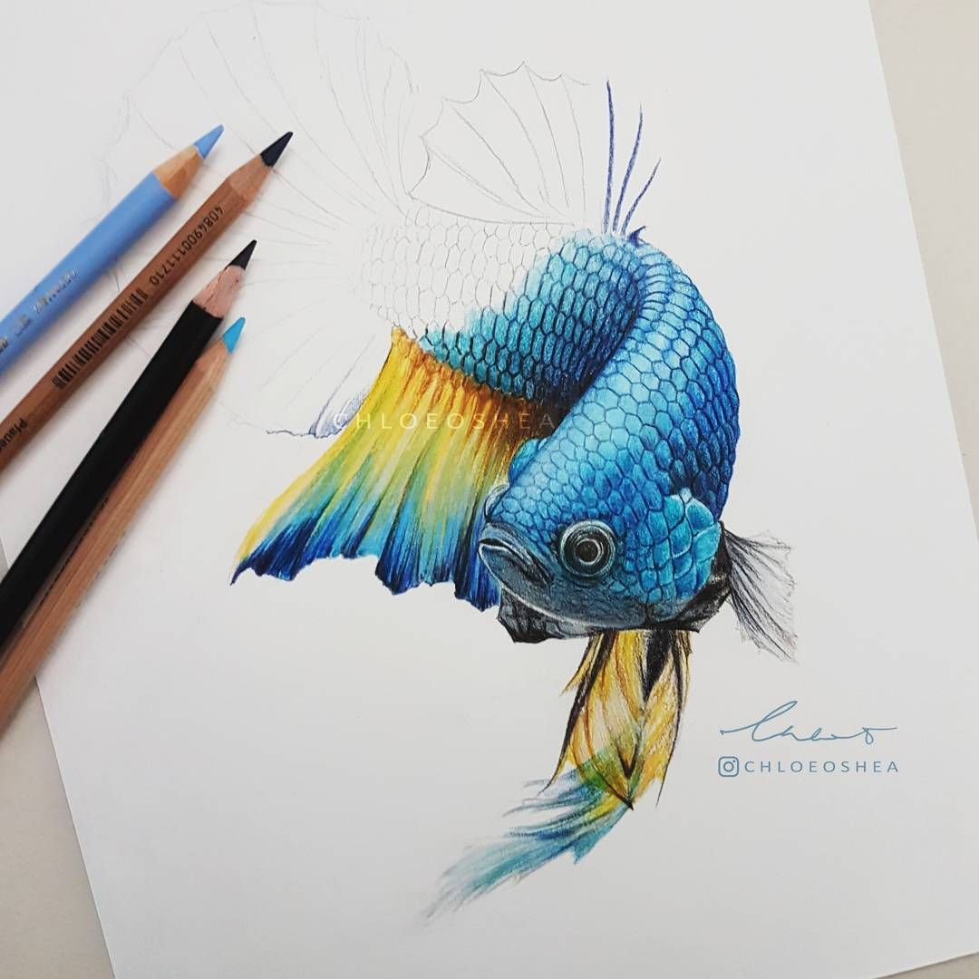 Work In Progress Of Another Betta Fish Colorful Drawings