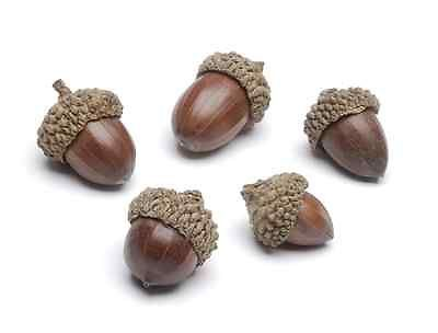 Acorns for Fall Wedding Accents 25 Acorns Perfect Fall Decorations | eBay