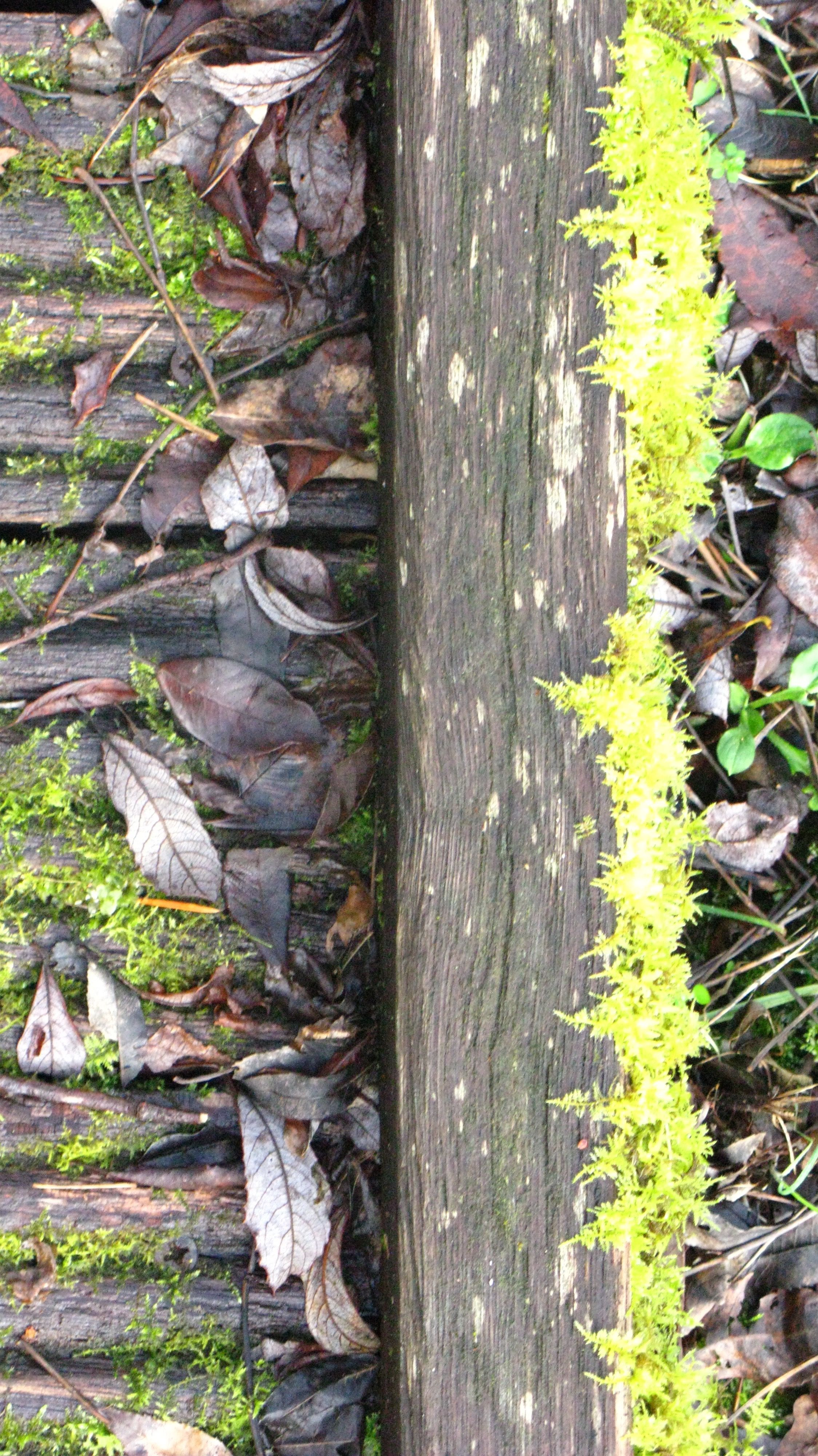 Mousse - Feuille - Bois - Herbe - Champi