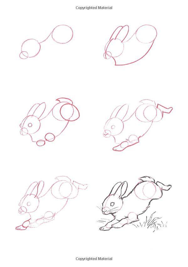 Paso a paso. Dibujar un conejo