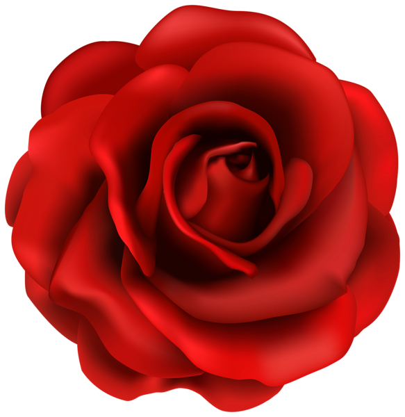 Red Rose Flower Png Clipart Image Rose Flower Png Red Rose Flower Rose Flower