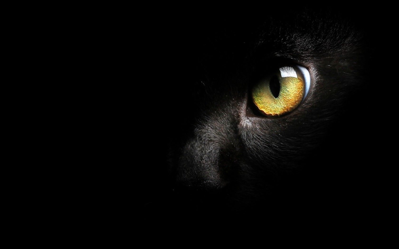 Pin By Love Care For Paws On Cats Eye Beauty In Dark Cat Wallpaper Eyes Wallpaper Cats