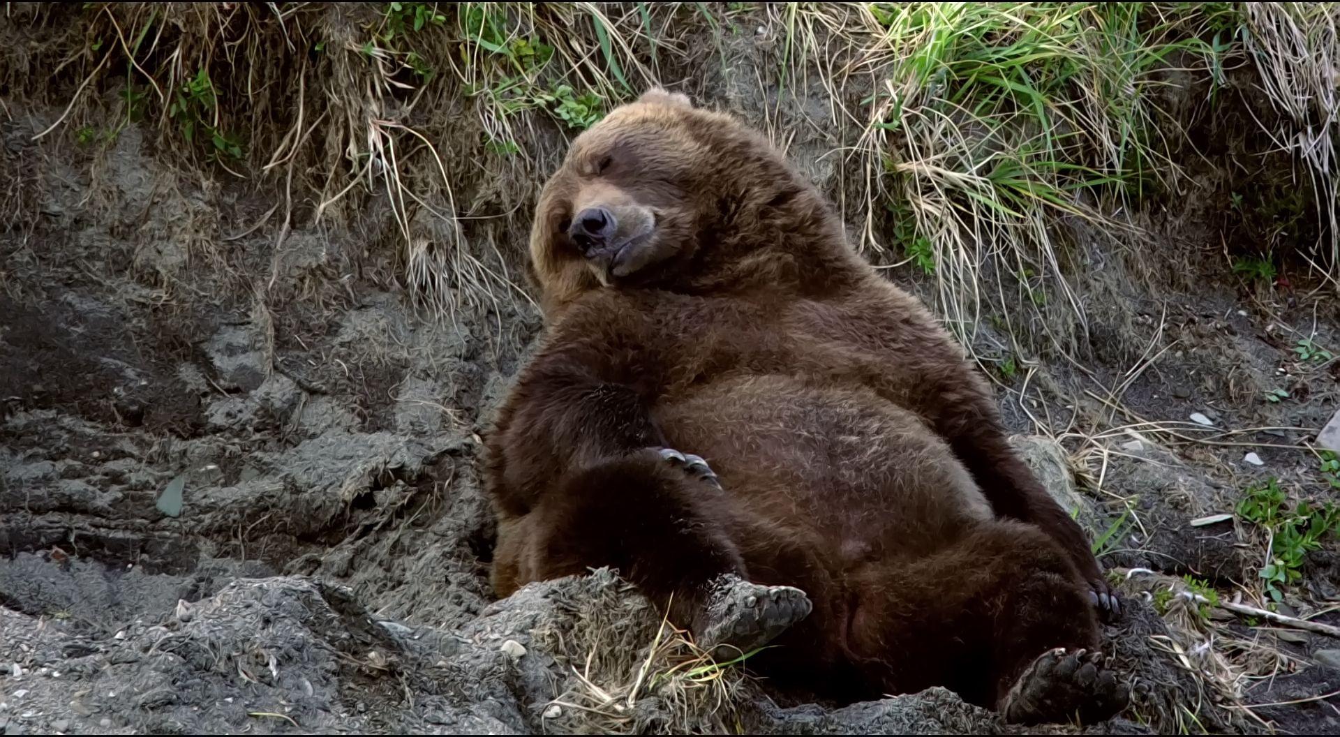 Bear images - Google Search | Bears | Pinterest | Bears