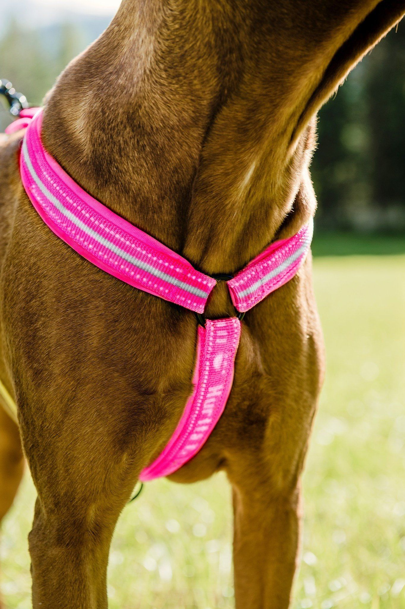 Hurtta Padded Dog Y Harness 2 Dogs