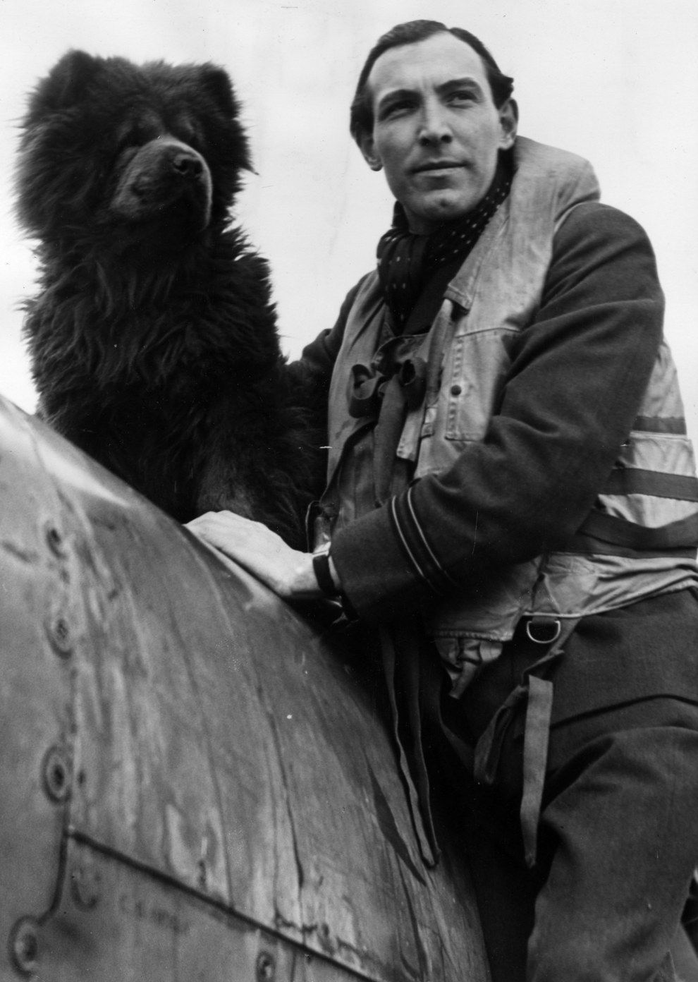 vintage everyday: The 20 Most Badass Photos of Animals from World War II