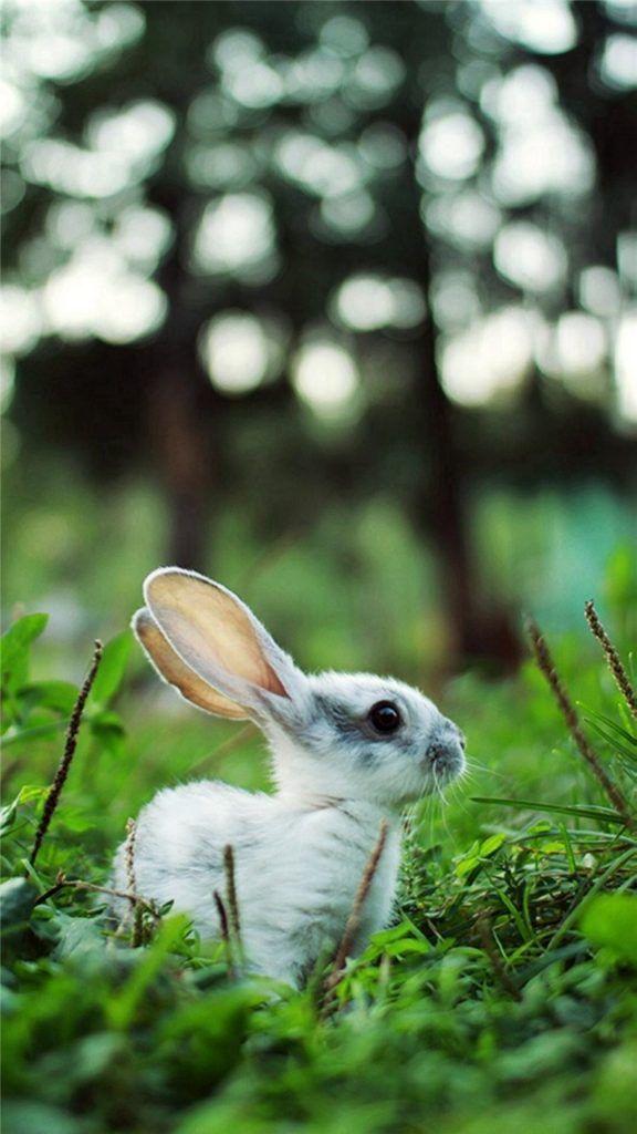 تصویر زمینه خرگوش Rabbit Wallpaper All In Bit Wallpaper In