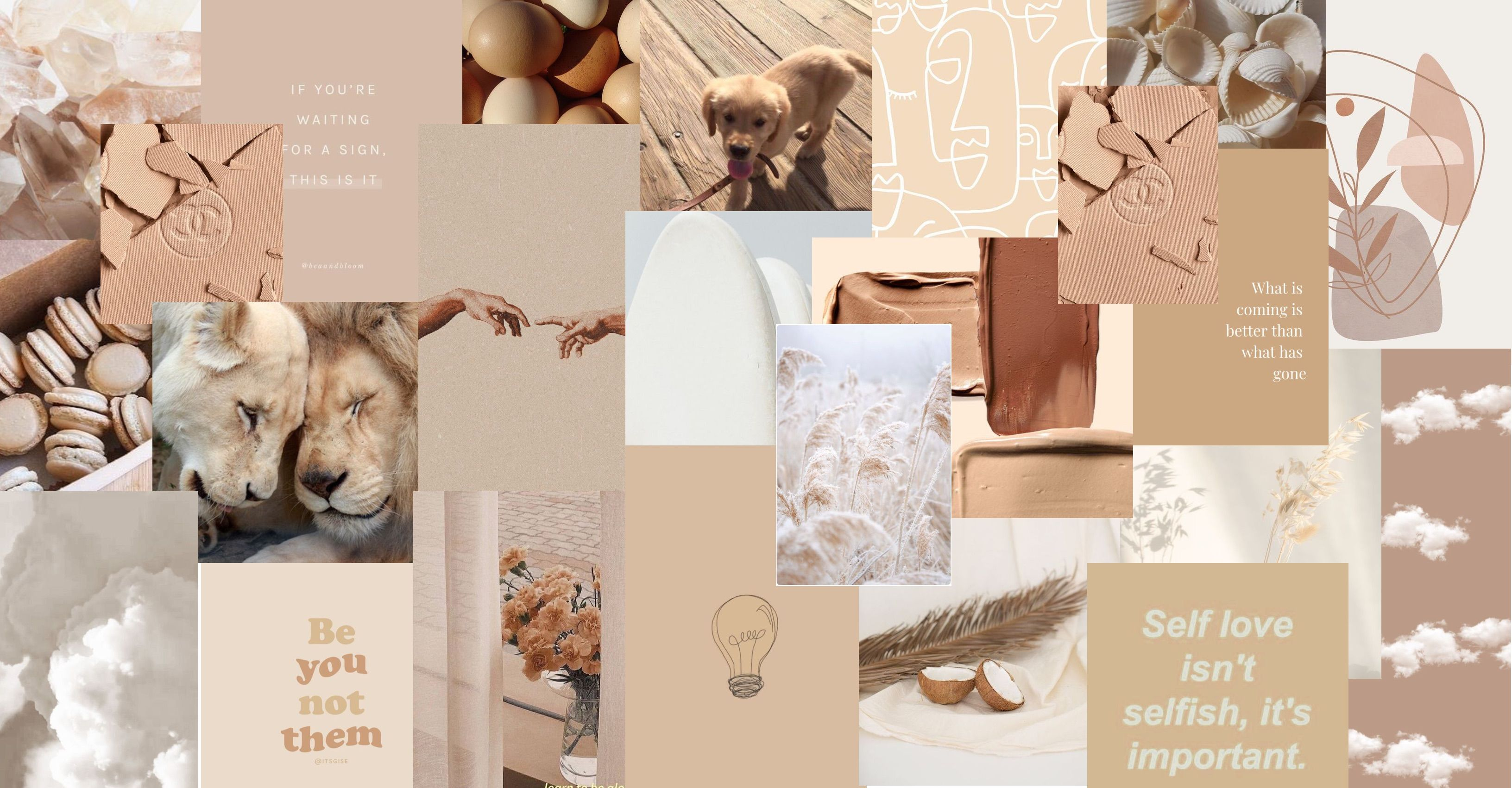 beige white aesthetic collage in 2021 flower