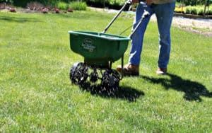 Top Dressing Lawn Benefits And Advice Plant For Success