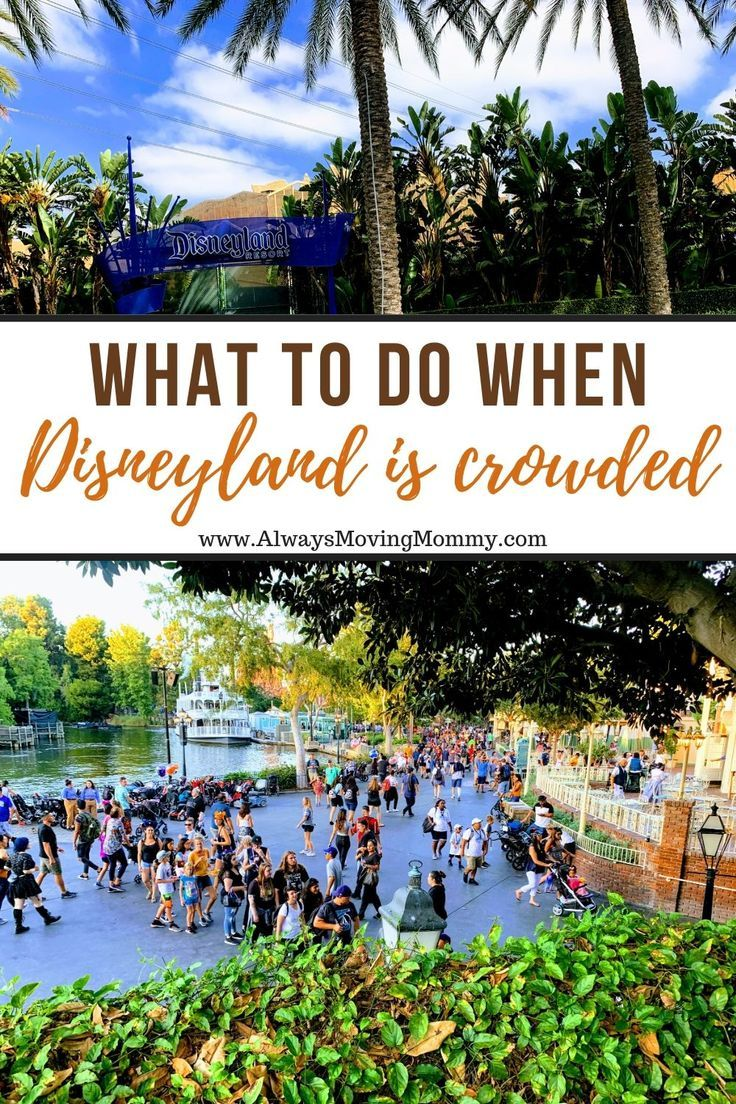 Photo of Disneyland Crowds: 5 heiße Überlebenstipps für die geschäftigsten Tage • Immer in Bewegung Mama
