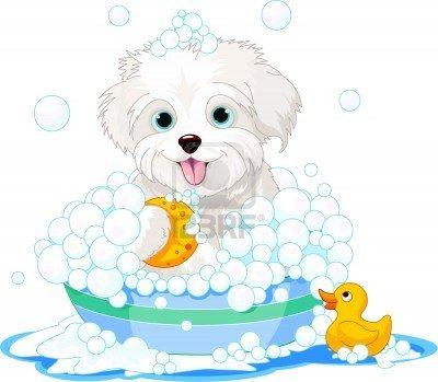 Stock Vector White Fluffy Dog Fluffy Dogs Dog Illustration