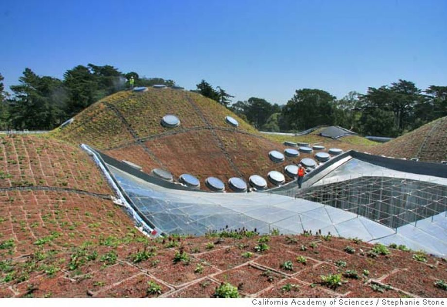 The roof of the California Academy of Sciences is alive!