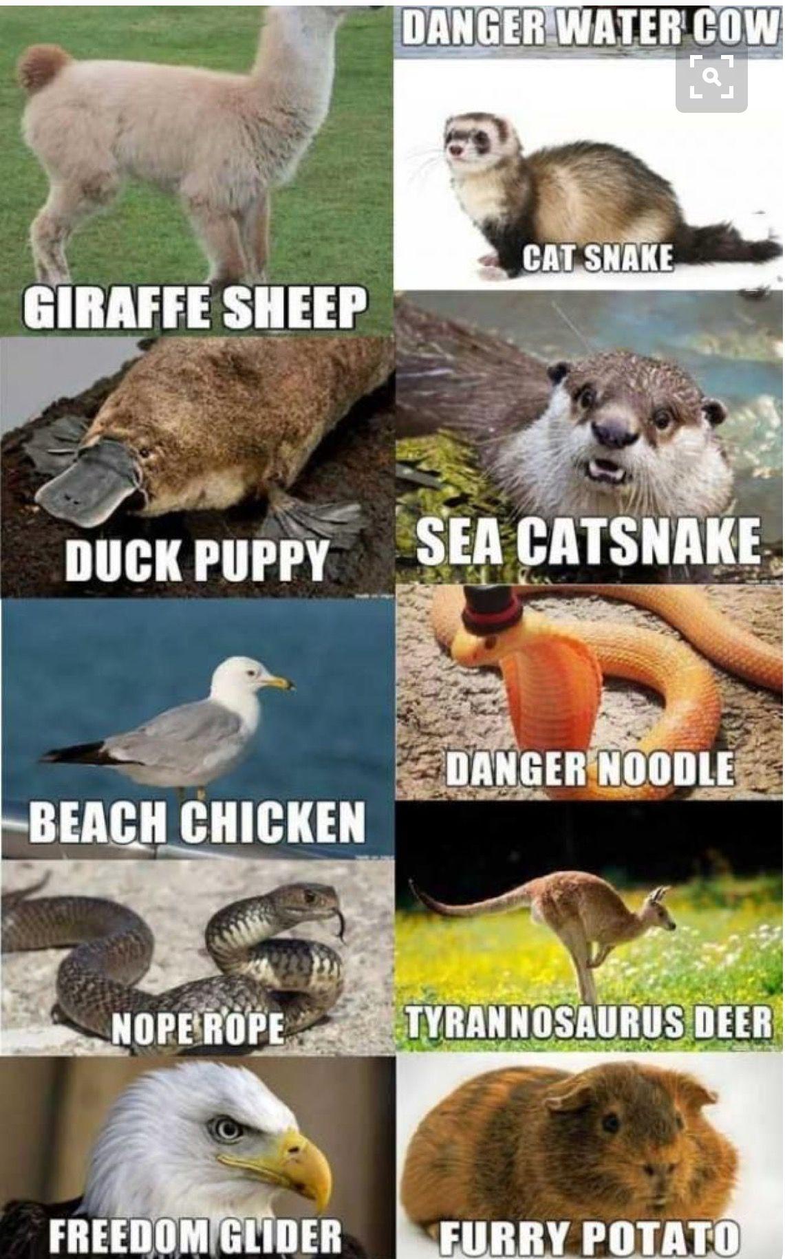 animal image by Gina Mkrtchyan Animal jokes, Funny