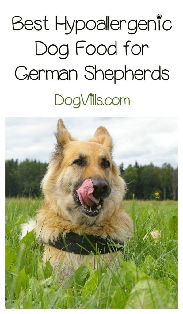 Best Hypoallergenic Dog Food For German Shepherds Hypoallergenic