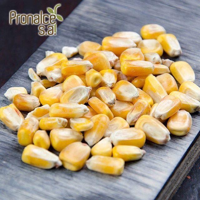 El maíz es un producto que caracteriza a la región andina y que está en el ADN de nuestra cultura, por eso hace parte de nuestros #ProductosPronalce ¡Calidad nutricional para tu mesa!