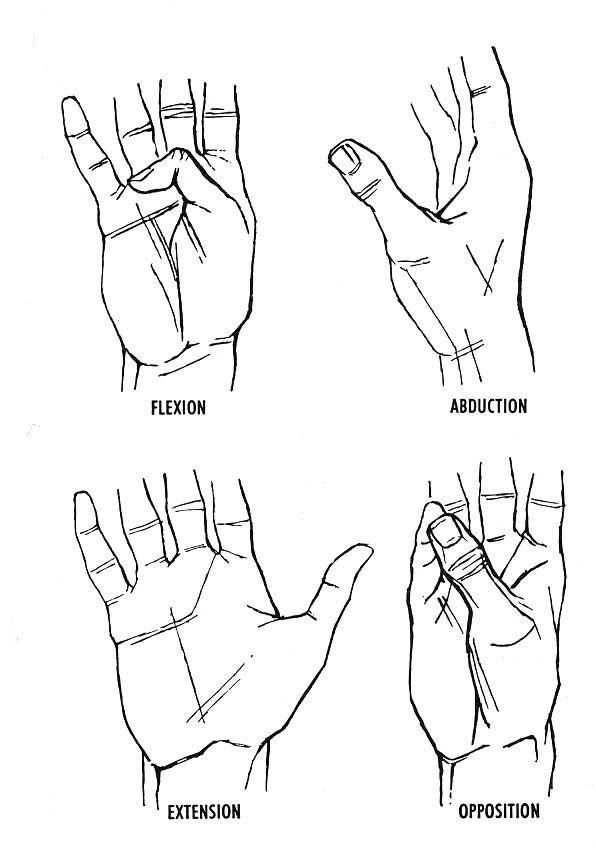 movements of the thumb | Anatomy/Medical Stuff | Pinterest