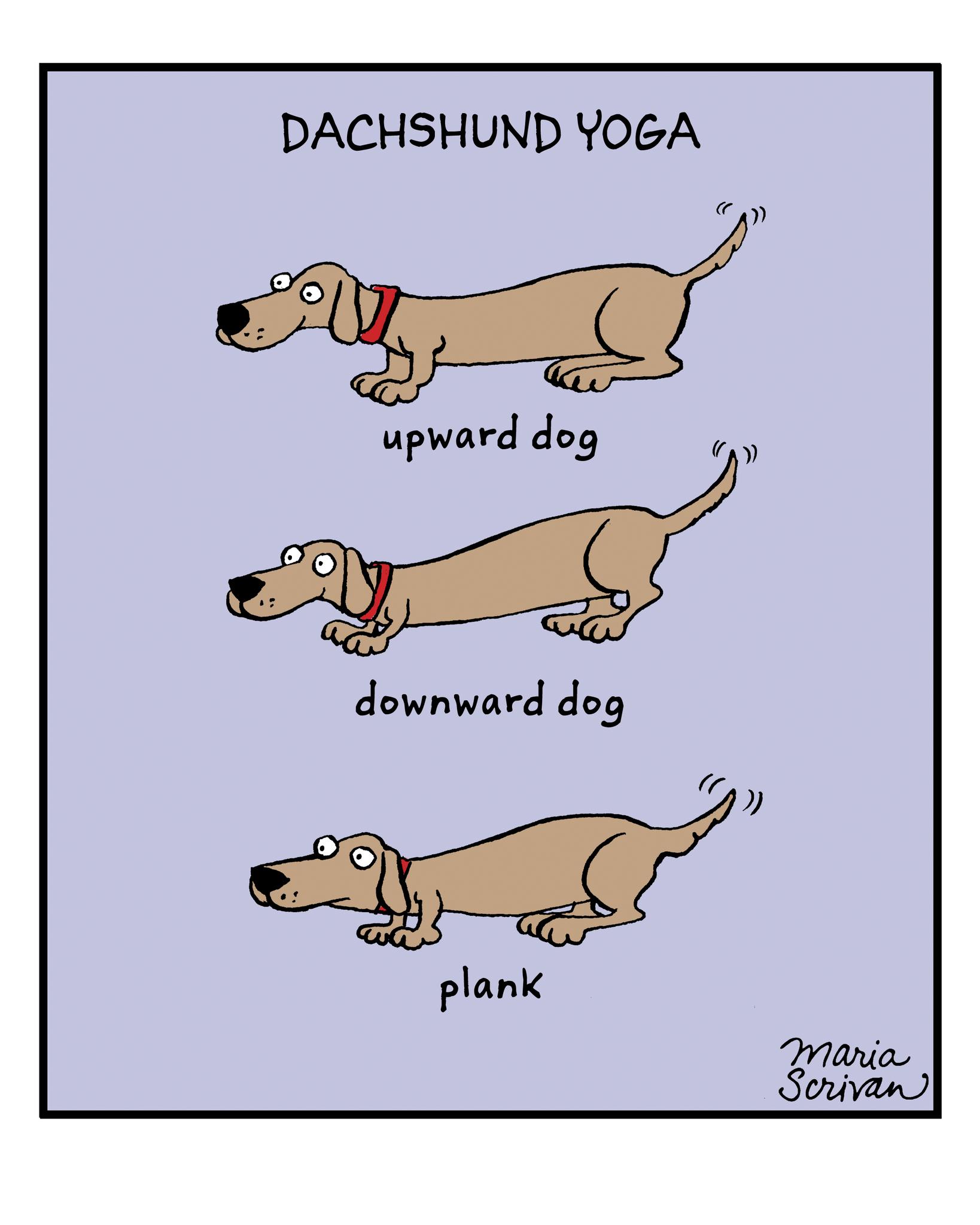 Dachshund Yoga Print Dachshund Weenie Dogs Dachshund Dog