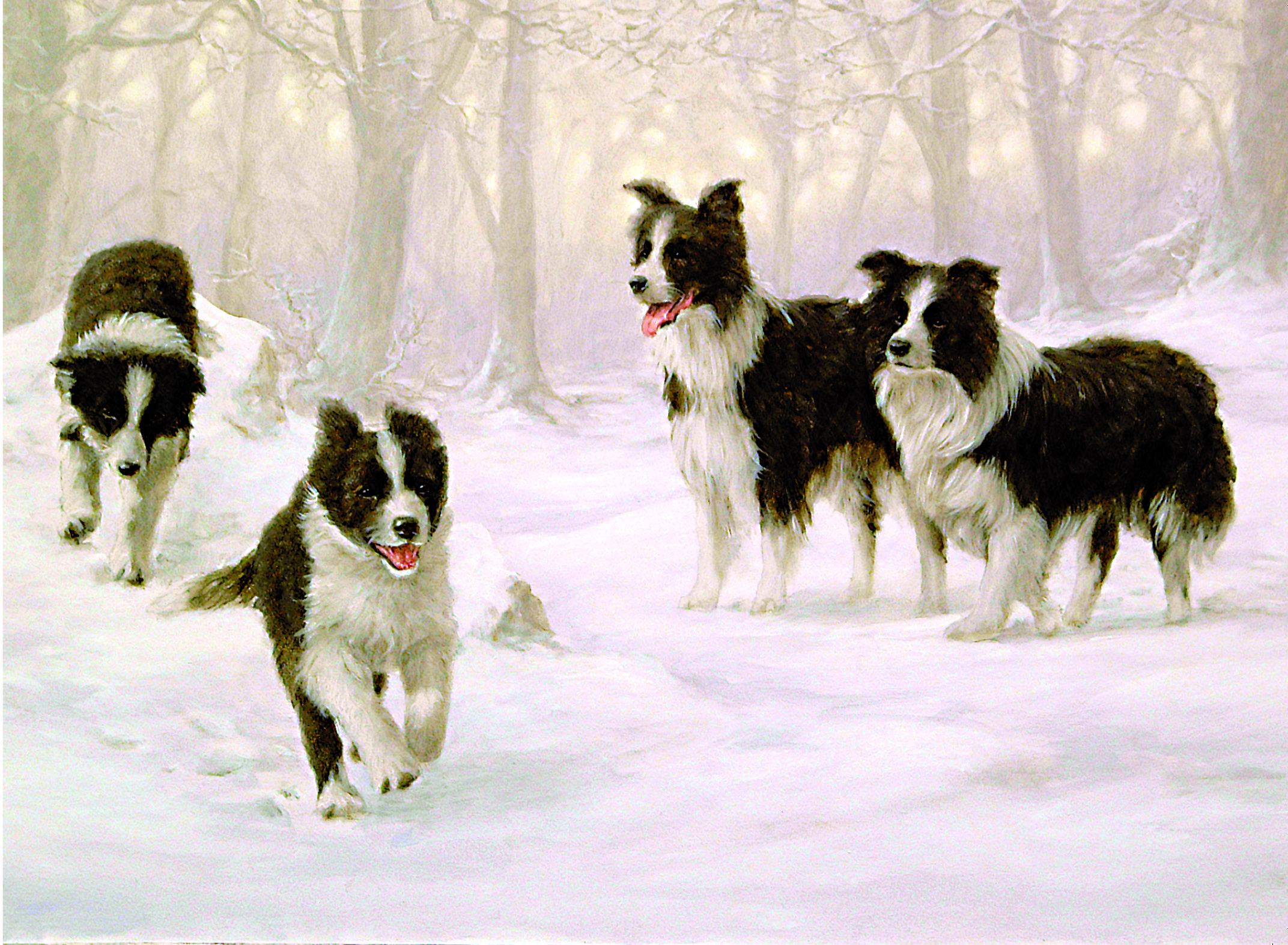 Winter Holiday - Border Collie Charity Christmas Card - John Silver ...