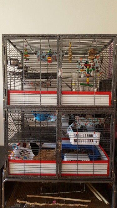 Diy Guards In Ferret Kingdom Pet Ferret Ferret Cage Pet Rats