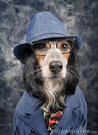 Dog With Style Royalty Free Stock Photos Image 19198678 Cute Funny Pics Fancy Dog Dog Wearing Clothes