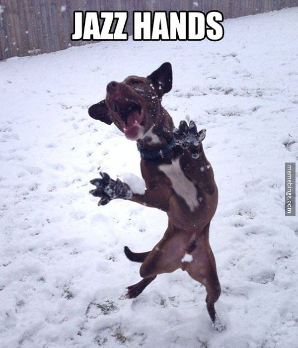 "Dog throwing the ""Jazz Hands"". http://mbinge.co/1okwLk5"