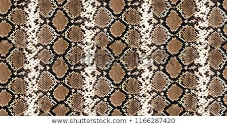 Python Skin Piton Texture Snake Pattern Animal Skin Pitone