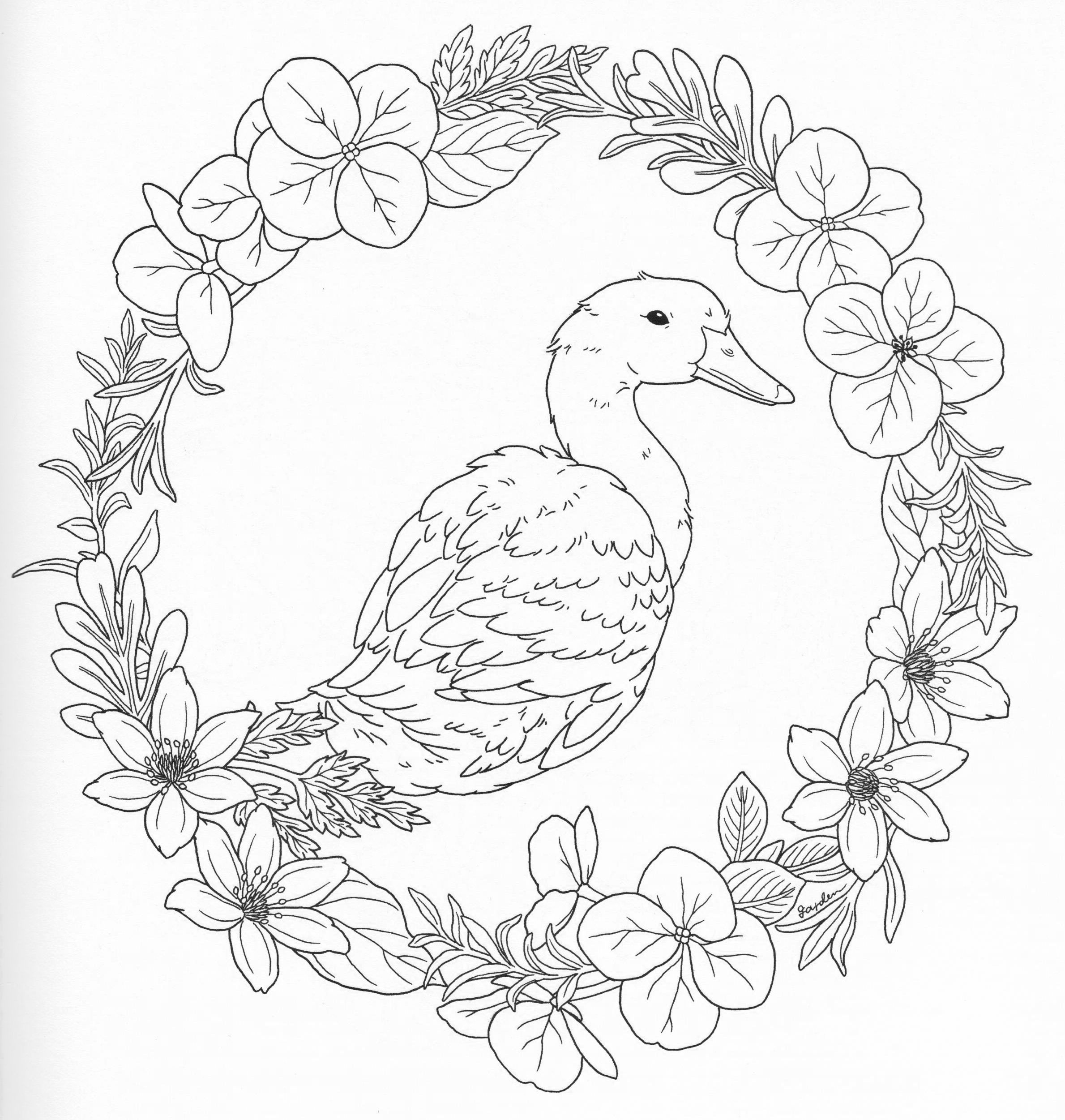 Harmony Of Nature Adult Coloring Book Pg 40