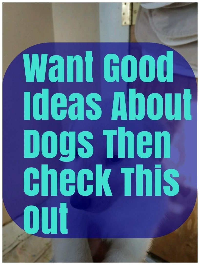 Great Advice Any Dog Owner Can Use Dogs, Organic dog