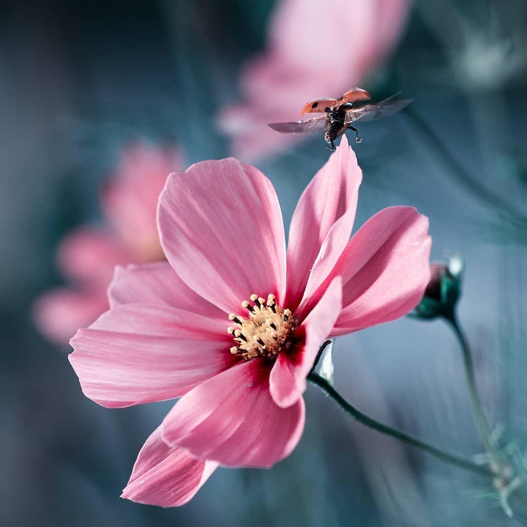 Flowerstagram wonderful flower photography by fabien bravin