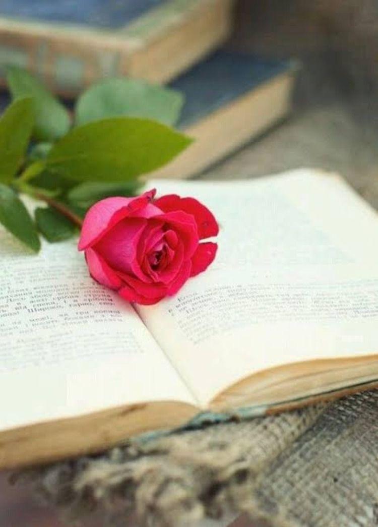 صور ورد صور زهور بوكيه ورد بوكيهات زهور بوكيهات ورد فرح Book Flowers Quotes About Photography Flower Quotes