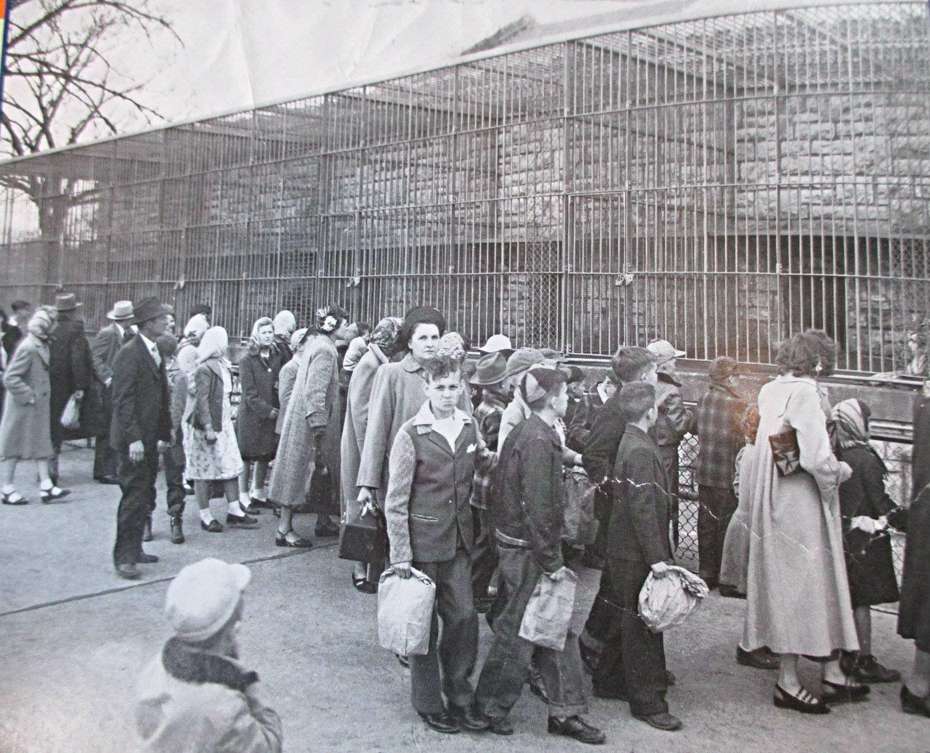 1950 Walking Outside At Kansas City Zoo Kansas City Zoo Kansas City Missouri Kansas City